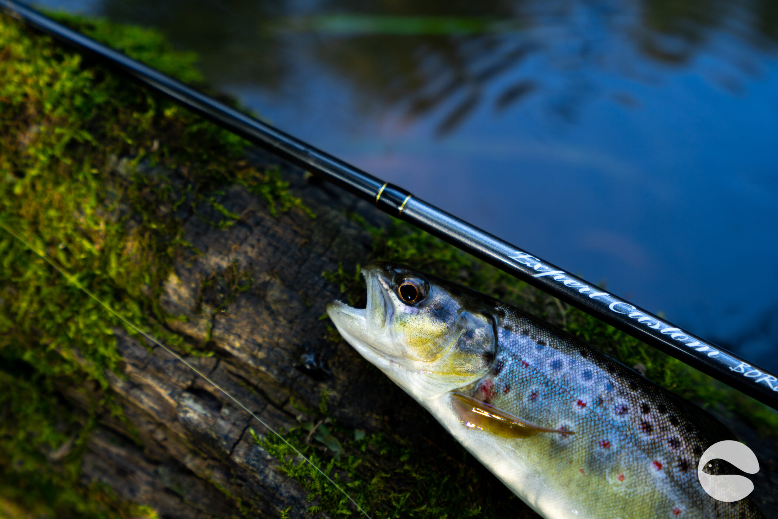 Ito Craft trout