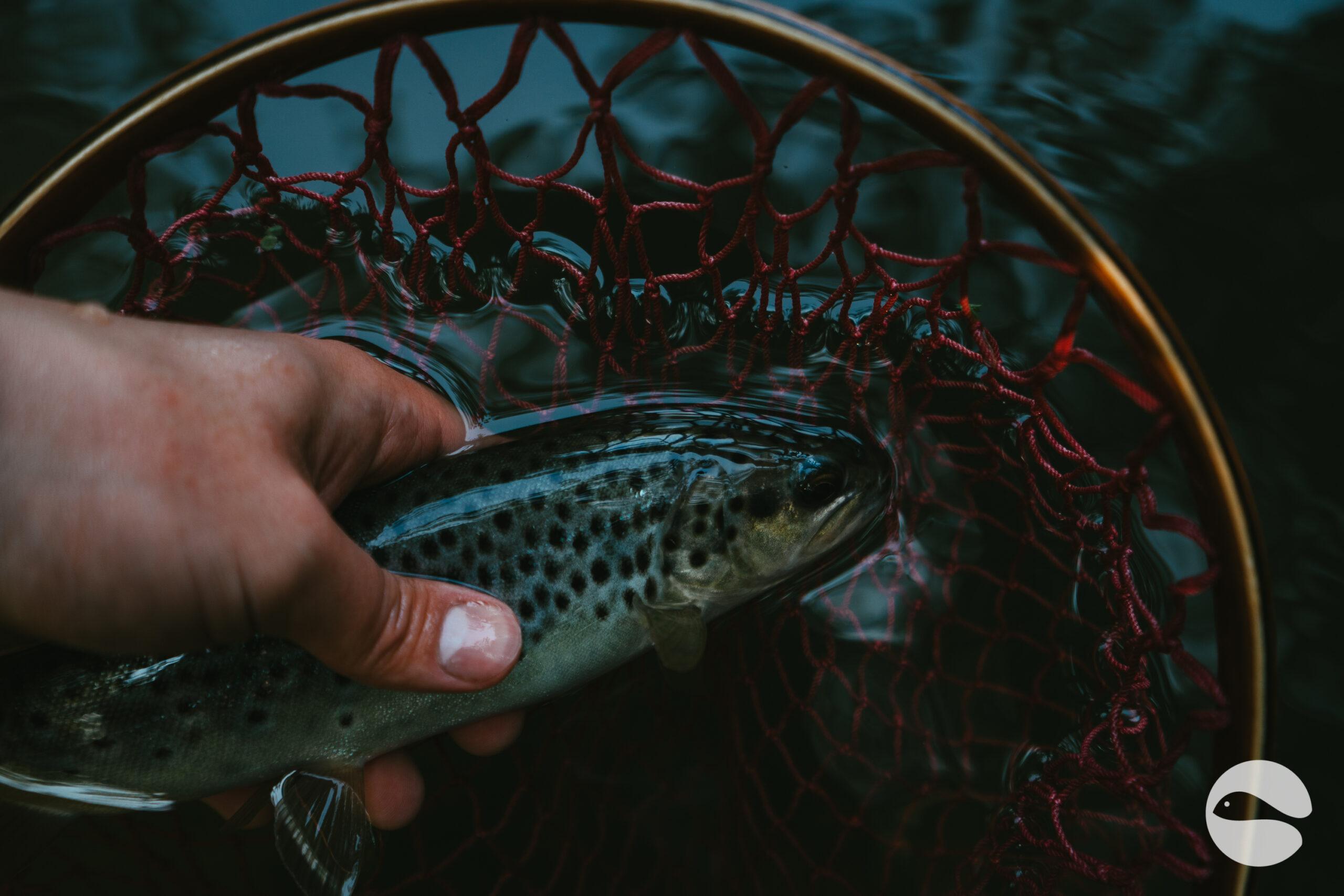 trout in landing net 2