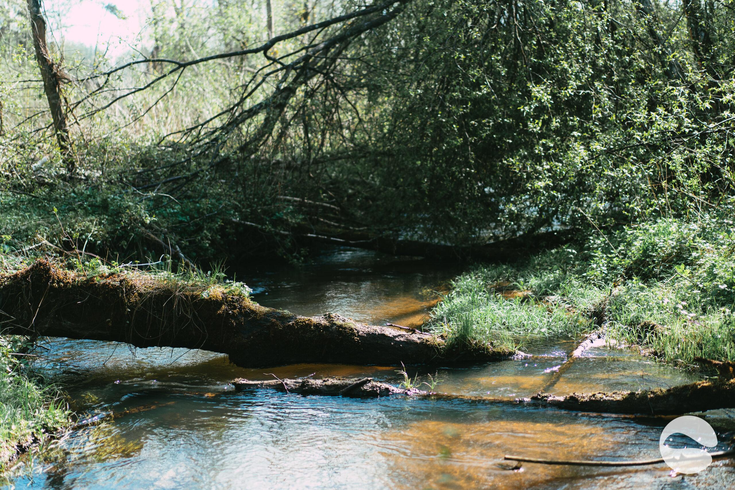 Small trout river 2