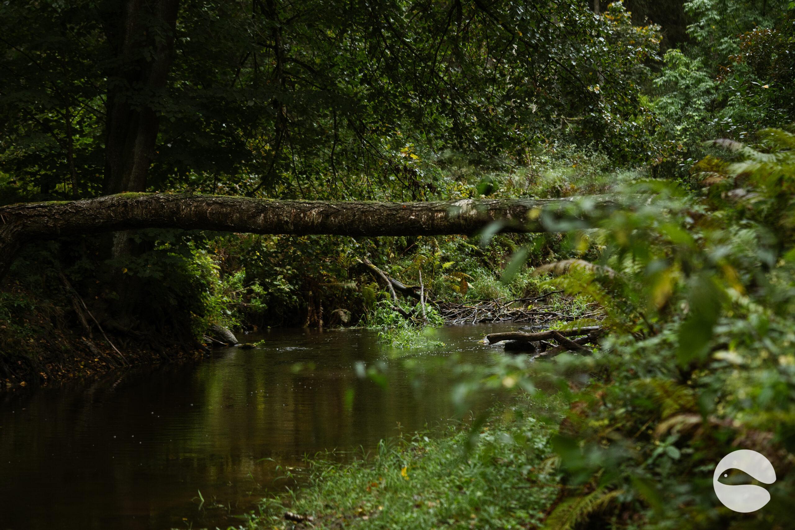 Small river (3)