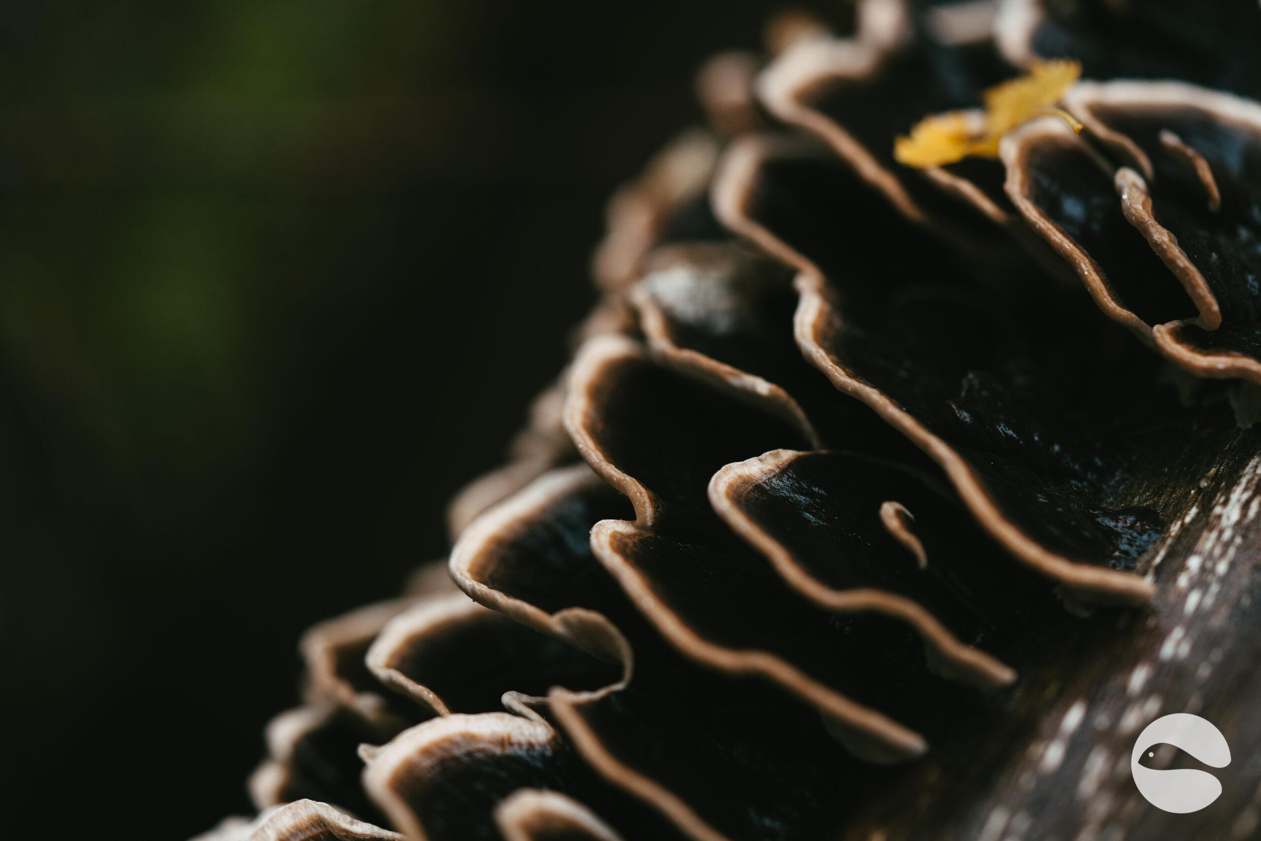mushrooms (2)